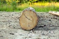 В Вельском районе  заготовщика леса придавило деревом насмерть