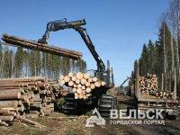 О том, как нужно бороться с незаконной выбубкой леса
