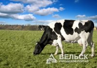 В Архангельской области увеличивается поголовье коров