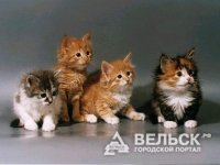 Жители Шенкурска помогут бездомным животным