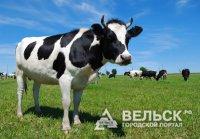 В Вельском районе открывается новая ферма на 200 голов скота