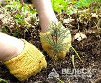 Посадим лес