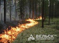 В Вельском районе пожар в лесу удалось потушить