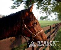 Выставка про коней