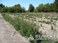В Поморье создадут новые лесопитомники