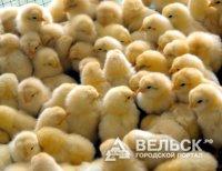 Сотрудники Няндомской птицефабрики могут стать безработными