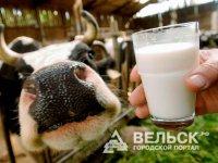 Объёмы производства молока выросли