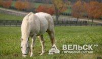 Причиной ДТП в Вельске стала лошадь