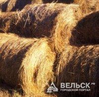 Вельск – лидер по заготовке картофеля