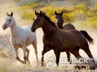 Праздник лошади