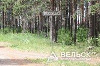 В Шенкурске незаконно рубили лес