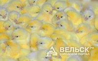 В России закрываются птицефабрики