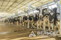 В Архангельской области появится животноводческий комплекс